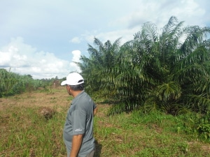 Roslin showing us an area that had been encroached by a palm plantation that they had cleared twice before they gave up.
