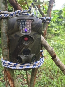 Three camera traps were deployed like this one. This camera trap was placed in the unsuccessful restoration site.