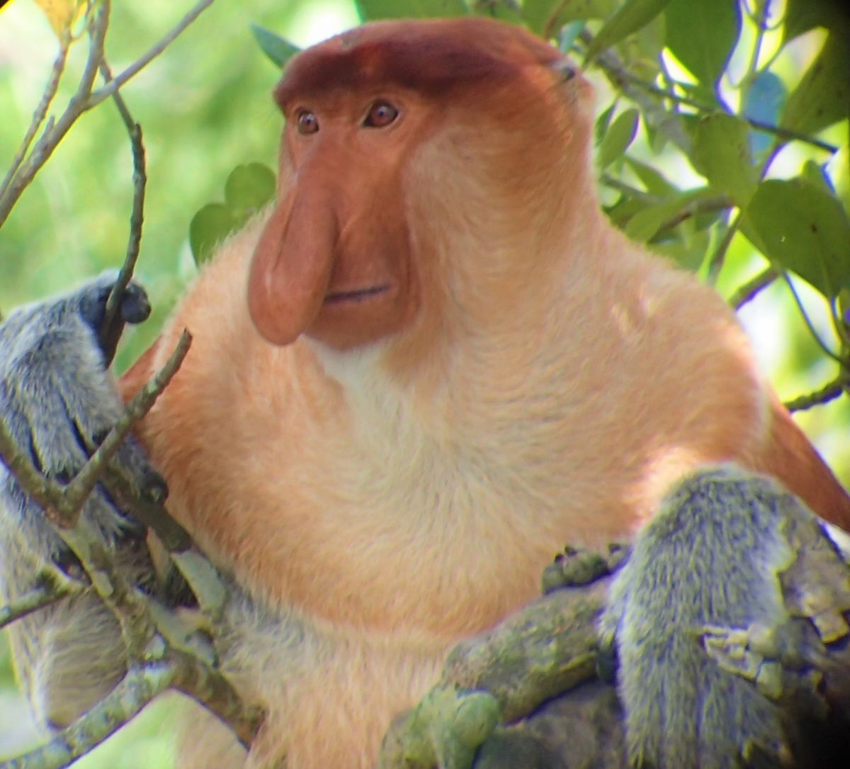 Problems for Proboscis! – Gretchen Coffman